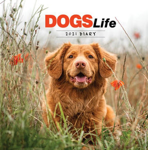Paper Pocket - Dogs Life 2021 Diary
