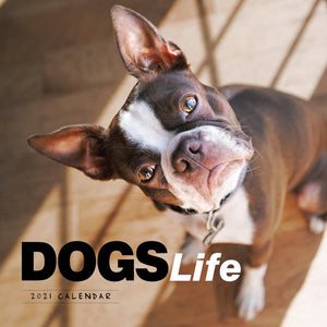 Paper Pocket - Dogs Life 2021 Calendar