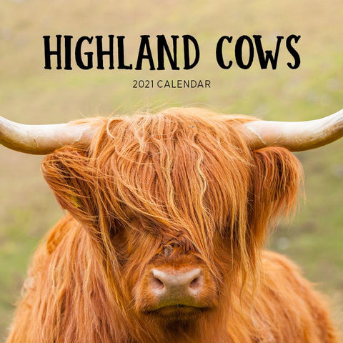Paper Pocket - Highland Cows 2021 Calendar