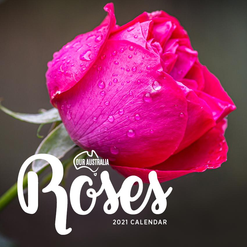 Paper Pocket - Our Australia Roses 2021 Calendar