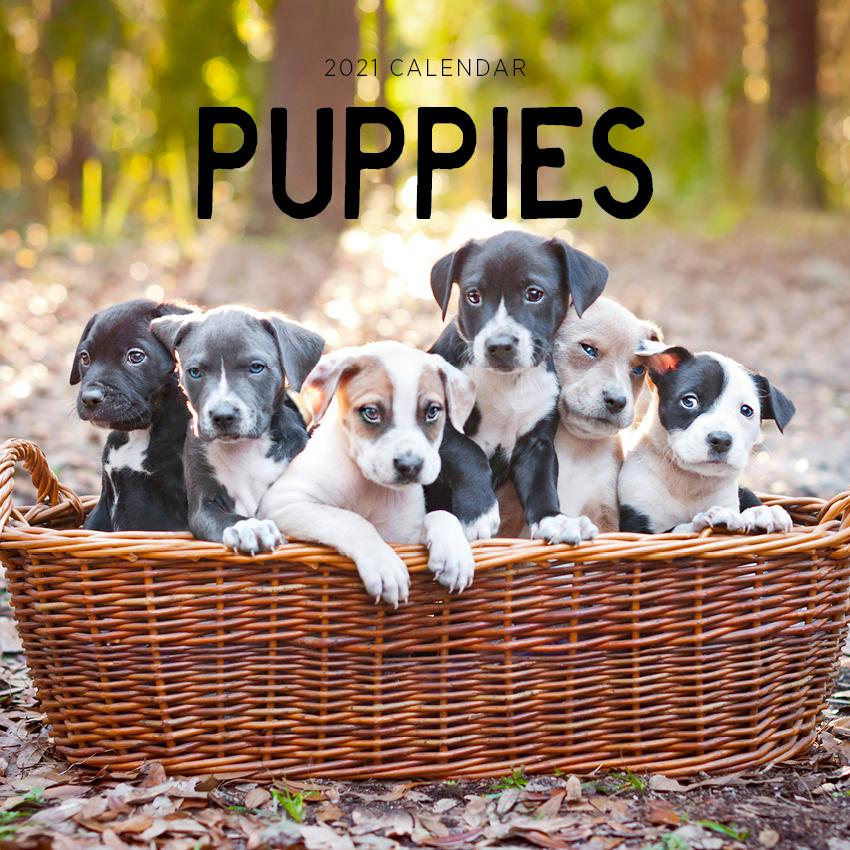 Paper Pocket - Puppies 2021 Calendar