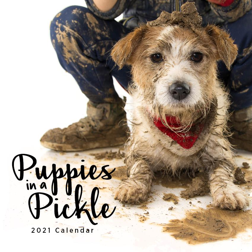 Paper Pocket - Puppies in a Pickle  2021 Calendar