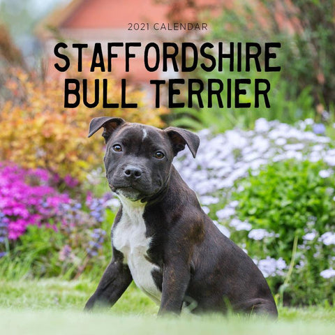 Paper Pocket - Staffordshire Bull Terriers 2021 Calendar