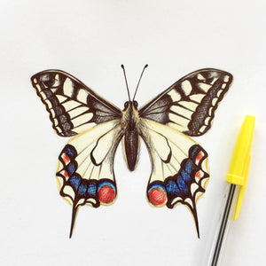 Drawing of a Swallowtail Butterfly by Kerry Dawn Illustration