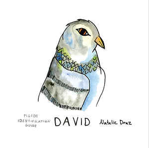 David the Pigeon - MAGNET