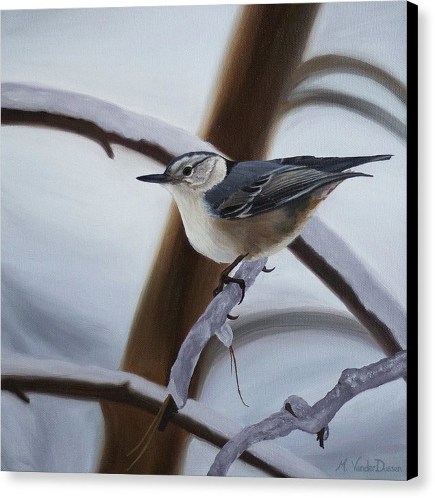 Nuthatch - Canvas Print