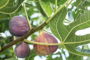 Organic Figs, 4 Pounds - Non-GMO, Kosher, Raw, Vegan - by Food to Live