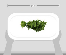 Load image into Gallery viewer, Cilantro, One Bunch