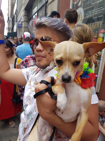 Chihuahua Love at NYC LGBT Pride March