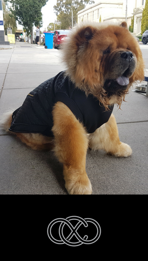 Black Leather Look Dog Jacket | Wolfgang Dog Coat | Warm & Comfortable
