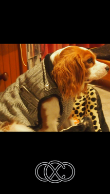 Winter Warrior Dog Jacket in Tweed