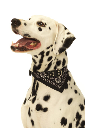 Iconic Bandana Dog Collar