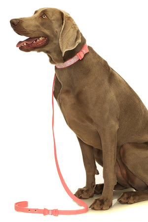 Ain't Misbehavin Dog Collar