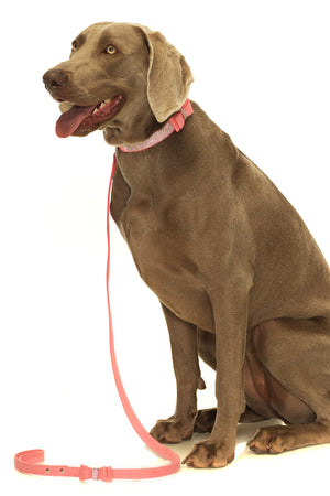 Ain't Misbehavin Pink Dog Collar with Diamantes