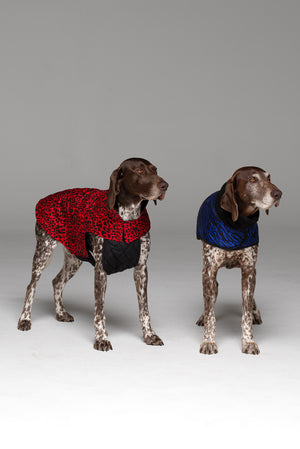 Two dogs in photo. Dog on left hand side wearing the Animal Instinct Dog Jacket in Racy Red.