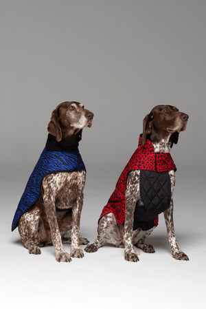 Two Superheros! Dog on left hand side in Liberbarkce Dog Coat in Blue Zebra and dog on right hand side in Animal Instinct Dog Jacket in Racy Red.