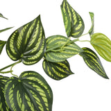 Bright Mixed Philodendron Plant 70cm