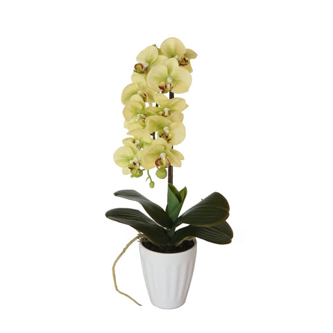 40cm Butterfly Orchid- Cream