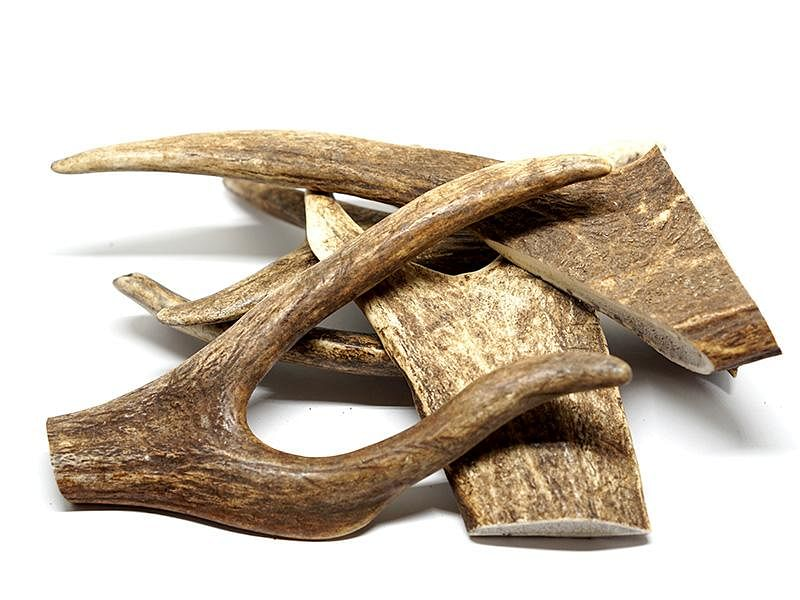 Deer Antlers Sustainable Treat / Chew