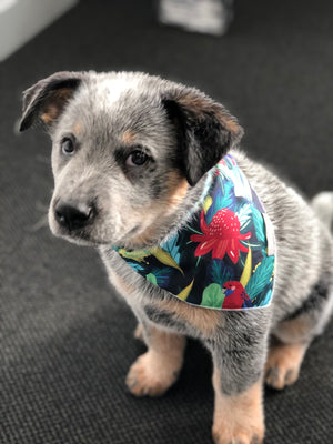 Australian Handmade Quirky Dog Bandanas - Cute Pet Accessories