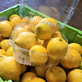 Fresh Lemons (5pc)