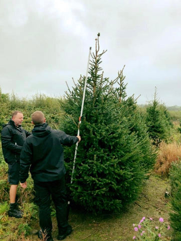 Choosing the perfect corporate tree from our plantations