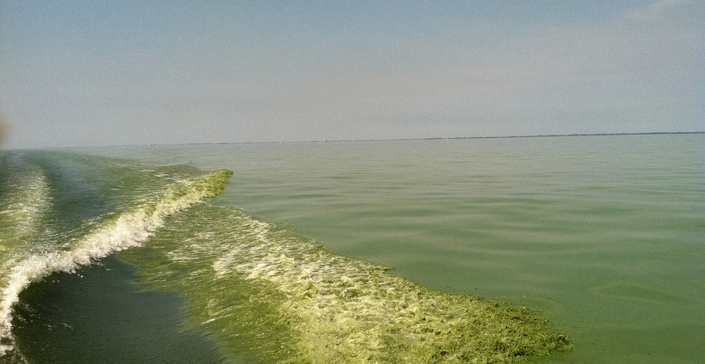 What on earth is a harmful algal bloom?