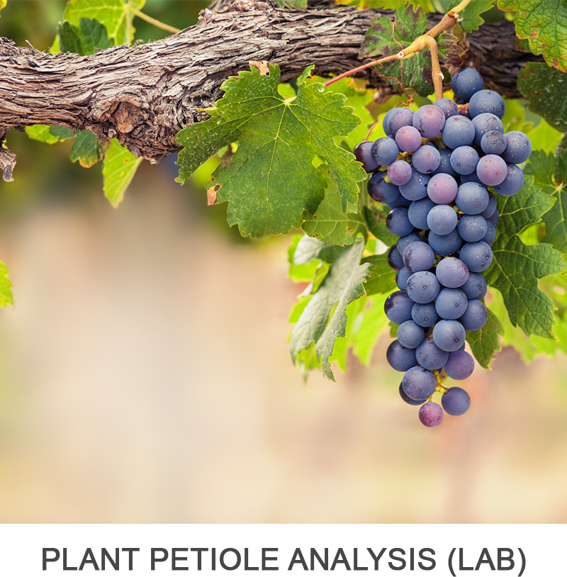 Plant Petiole Analysis (for Grapes)