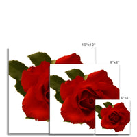 Red rose C-Type Print , Red rose Prints , Floral prints