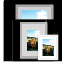 Highland Cow 16 Framed & Mounted Print