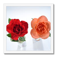 Two roses Framed Print ,  floral prints from Photogold gifts