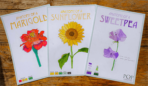 Extra Spring Watercolour Cards Set