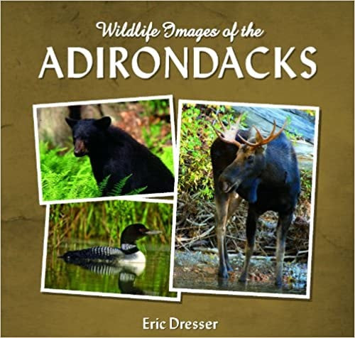 Wildlife Images of the Adirondacks by Eric Dresser