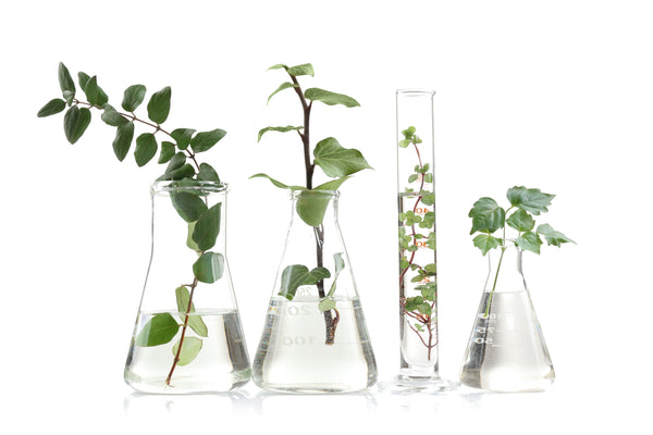 glass beakers with green plants in them