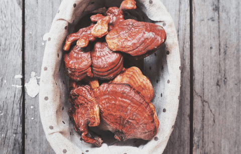Why You Should Be Drinking Reishi Mushroom Coffee