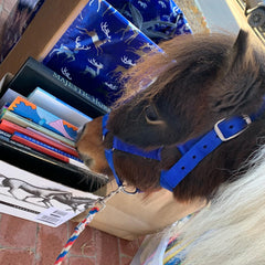 saddle up and read horse