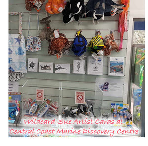 Going WILD in the Central Coast Marine Discovery Centre gift shop