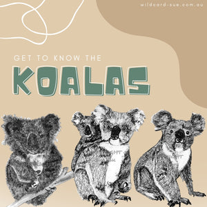 All about Koalas and a giveaway