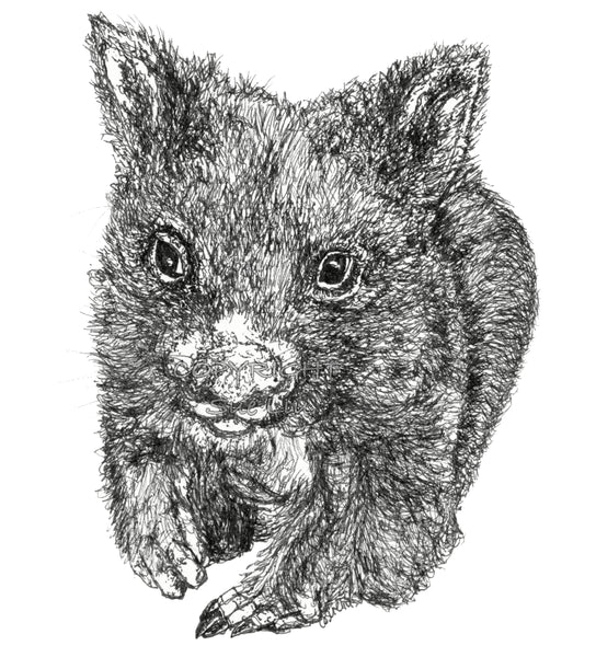 Wombat - Bill the Baby Wombat