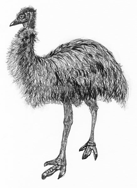 Emu - Fluffy the Emu