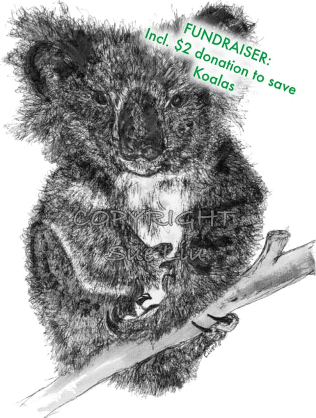 Koala - Stephanie the Koala