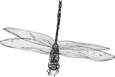 Dragonfly - Marie the Dragonfly