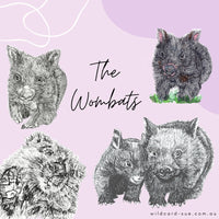 Wombat - Billie the Baby Wombat
