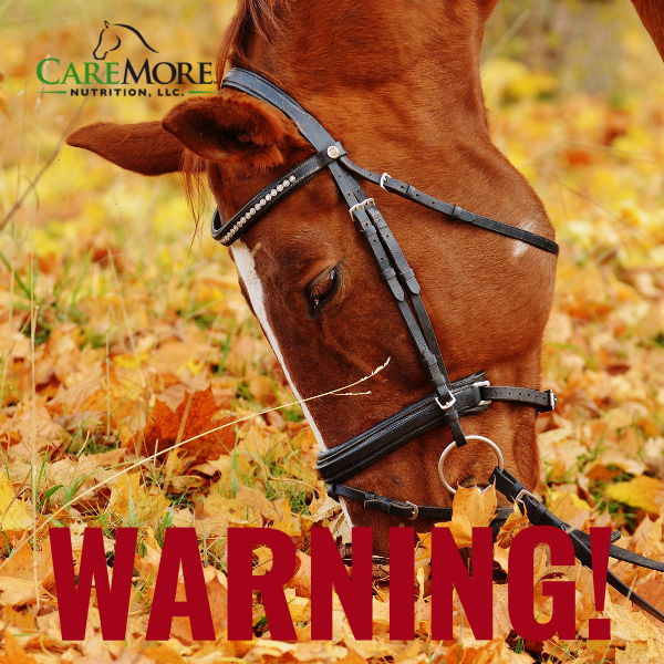 WARNING! Hidden Danger of Fall Foliage