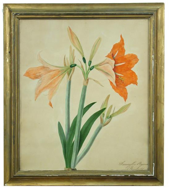 BURY, Priscilla Susan Falkner (1799–1872). Amaryllis Reginae. Fairfield, 31 March, 1829.