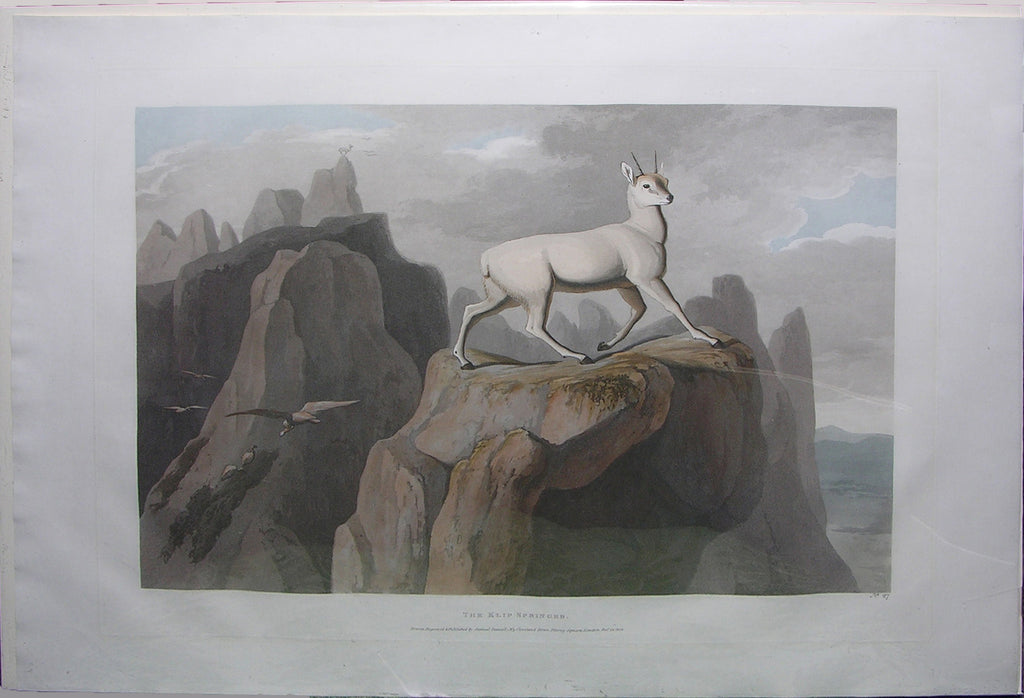 DANIELL, Samuel (1775-1811). The Klip-Springer. London: Samuel Daniell, 1805.