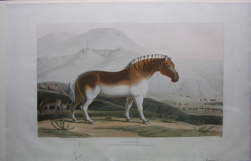 DANIELL, Samuel (1775-1811). The Quahkah. London: Samuel Daniell, 1805.
