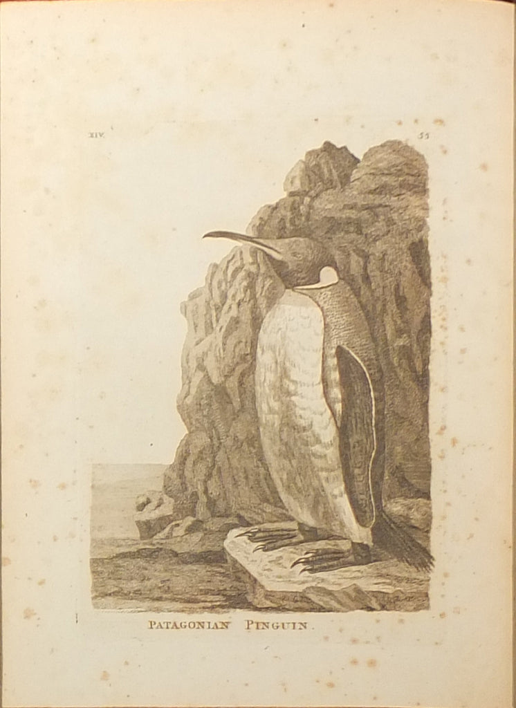 PENNANT, Thomas (1726-1798). Genera of Birds. London: B. White, 1781.
