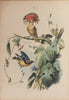 [?BECKER, W.]. Album of the finest Birds of all countries. Philadelphia: Weik & Wieck, [c. 1860].