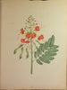 BRAZILIAN FLORA. A Magnificent Album of Original Watercolours of Brazilian Flowers. 1800-1825.